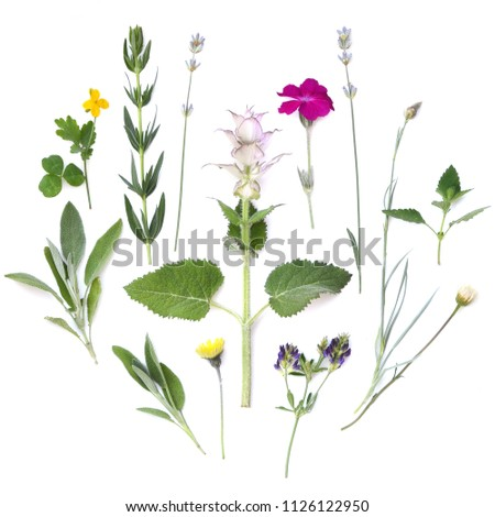 Composition of plants and flowers on a white background. Medicinal spicy aromatic herbs. Flat lay, top view #1126122950