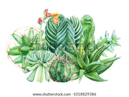 composition of succulents, cactus, green plants, botanical painting, watercolor illustration