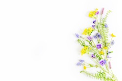 composition of wildflowers on a white background, top view. daisies, pansies, primrose, clover, bells