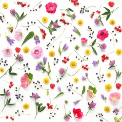 Composition pattern from plants, wild flowers and  berries, isolated on white background, flat lay, top view. The concept of summer, spring, Mother's Day, March 8.