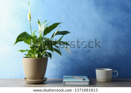 Composition with peace lily, notebook and cup on table against color wall. Space for text #1371881813