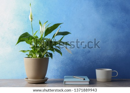 Composition with peace lily, notebook and cup on table against color wall. Space for text #1371889943