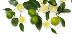 Composition with twigs of lime tree with fruits isolated on white background. Above view.