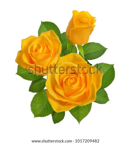 Composition with yellow roses. Isolated on white background.
