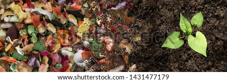 Compost and composted soil cycle as a composting pile of rotting kitchen scraps with fruits and vegetable garbage waste turning into organic fertilizer earth with a growing young plant as a composite.