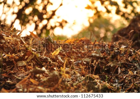 Compost, organic natural leaves.