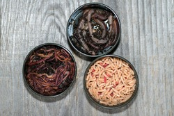 Compost worms, fly larvae and large earthworms in fishing boxes on a wooden grey background. The concept of choosing bait for fishing.
