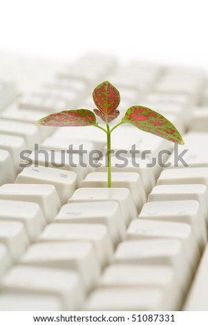 Computer Keyboard and sprout, concept of learning