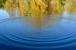 Concentric circles on the blue water of the pond with a reflection of the yellow autumn forest