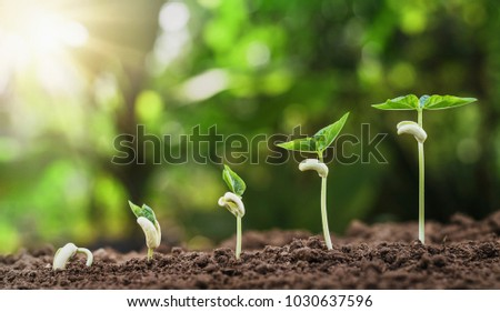 concept agriculture planting seeding growing step in garden with sunshine - Shutterstock ID 1030637596