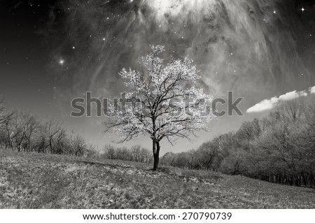 Concept. Black and white image of a Lonely blossoming tree against the starry sky space NASA. design elements