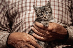 Concept friendship and help of animals cat and people. Senior elderly man holds kitten in arms.