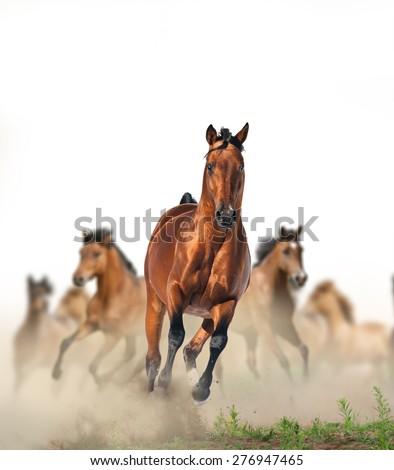 Wild Horse Running Fast Concept: Herd Of Wild ...