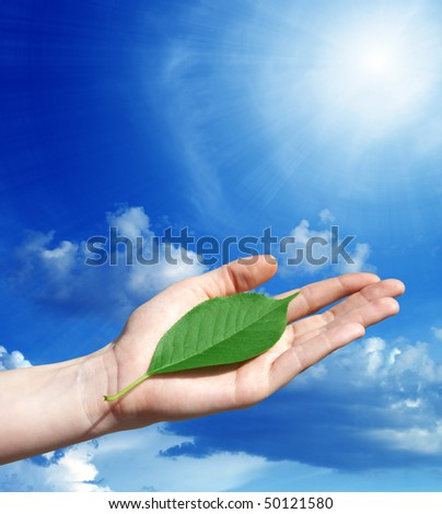 concept image - green leaf in a human hand on a sunlight background