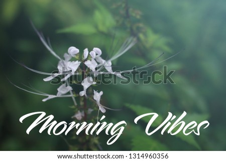 Concept image with word Morning Vibes with beautiful flower in nature background