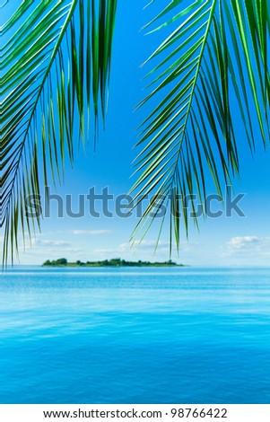Concept Landscape Palm