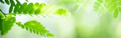 Concept nature of green leaf on blurred bokeh with copy space using as background natural, abstract background, greenery background, fresh wallpaper.