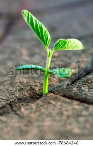 Concept new life. Rising sprig on dry ground.