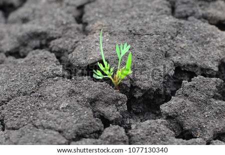 Concept of a life and purpose. Lonely green sprout breaks through the dry earth. Ecology and environment background.