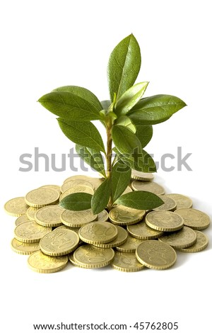 Concept of a plant and coins in white background