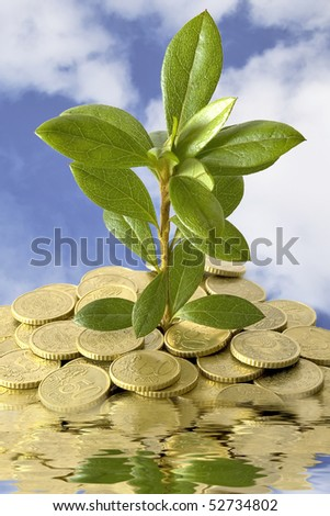 Concept of a plant and coins to grow on the water