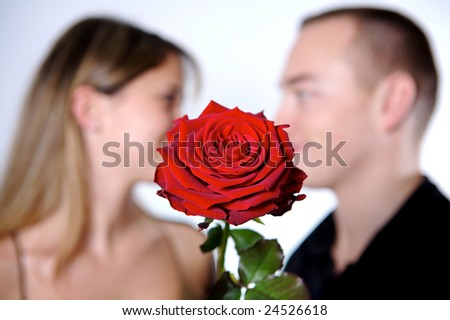 concept of a romance, rose , beautiful depth of field