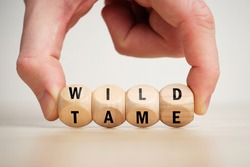 Concept of antonym wild and tame on wooden blocks.