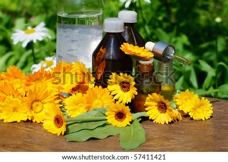 Concept of calendula  flower essential oil and tincture - beauty treatment.