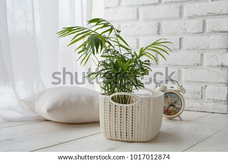 Concept of courting domesticated plants