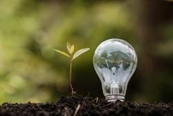 Concept of Eco technology.plant tree light bulb