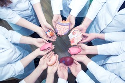 Concept of Education. A Group of Medical Students in Lab Coats Holding the Models of Organs in Their Hands. Top view.