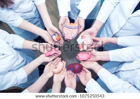 Concept of Education. A Group of Medical Students in Lab Coats Holding the Models of Organs in Their Hands. Top view. #1075250543