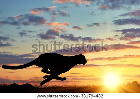 Concept of hunting. Running cheetah silhouette against the evening sky in the sun