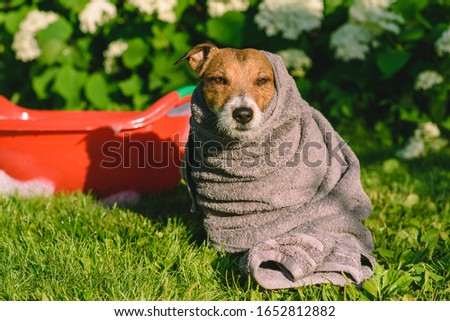 Concept of spring clean up: dog having bathe outdoor at back yard lawn