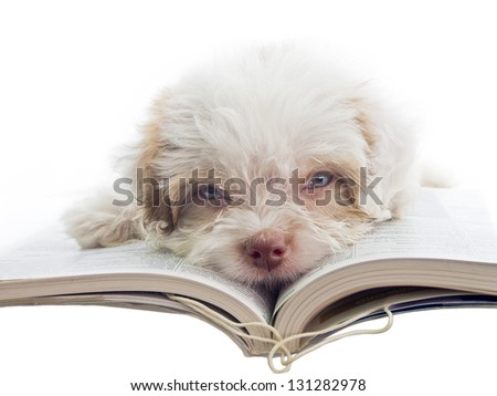 concept of student bored with homework - english puppy dozy over reading a book - stock photo