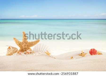 Concept of summer beach with starfish and shells  #256931887