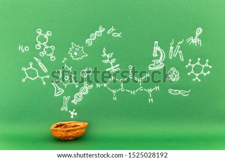 Concept of the phrase biology in a nutshell. Biological formulas and symbols drawn on green paper with walnuts