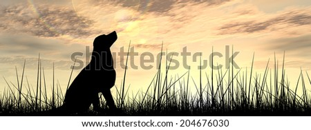 Concept or conceptual young beautiful black cute dog silhouette in grass over a sky at sunset landscape background, metaphor to nature, summer, fun, happy, domestic, vacation, peace or relax banner