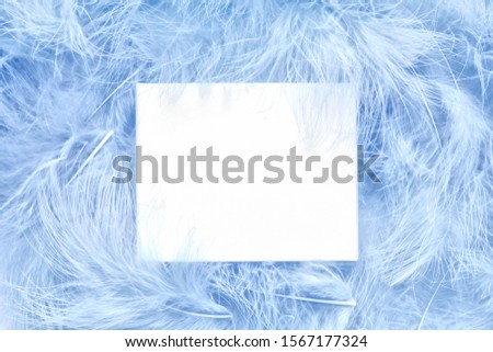 Concept with soft cerulean colored feathers. Creative glamour layout made sky blue feather. Flat lay. White card with place for design. Celebration, minimal festive background. #1567177324