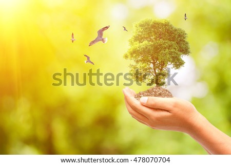 Concept World Environment Day,Close up image of human hands holding tree on blur abstract natural background #478070704
