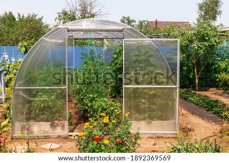 Conception of sunner, gardening, healthy food and eco products. The small greenhouse with growing tomatoes and cucumbers in the garden with green vegetationon a sunny summer day. Stock photo ©