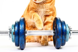 Conceptual  image of a cats paw reaching out to cast iron dumbbells on a spinlock bar