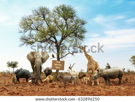 Conceptual image of different wild animals meeting as a team #632896250