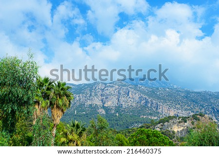 Conceptual image of exploration showing mountains, palm trees and blue skies with white clouds