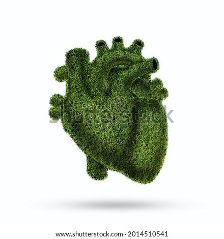 Conceptual image of green grass shaped like human heart, Green grass shaped in human heart. Conceptual image, Humanheart. Respiratory system. Healthy heart. grass human heart, vegetable