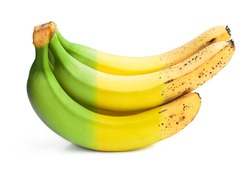 Conceptual  image of half ripe banana bunch showing different stages