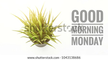 conceptual images of top view plant in pots and word-Good morning Monday with isolated white background
