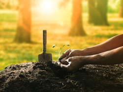 conceptual of hand planting tree seed on dirty soil against beautiful sun light in plantation field use for human activities and future growth