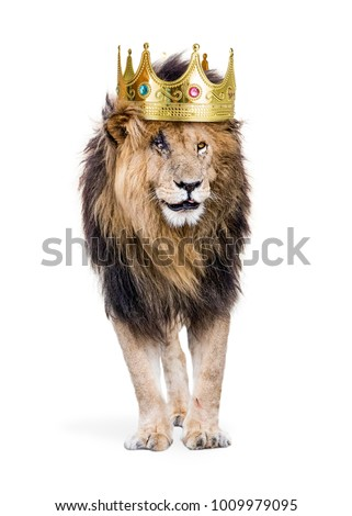 Conceptual photo of male lion with battle scars wearing a king of the jungle crown. Isolated on white.