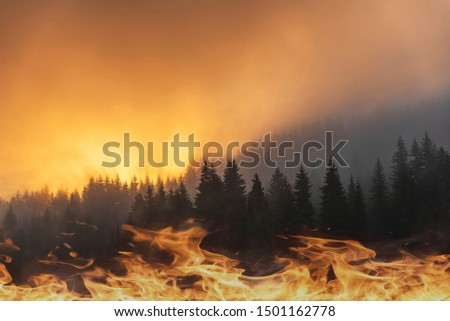 Conceptual picture of forest fire in red and orange color and clouds of dark smoke in pine stands. Flames in foreground